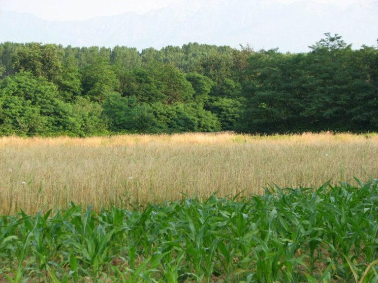 az agricola vallini3